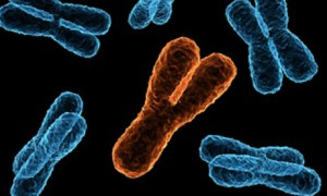 x and y chromosome